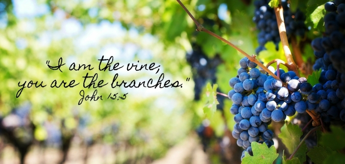 vine-and-branches.jpg