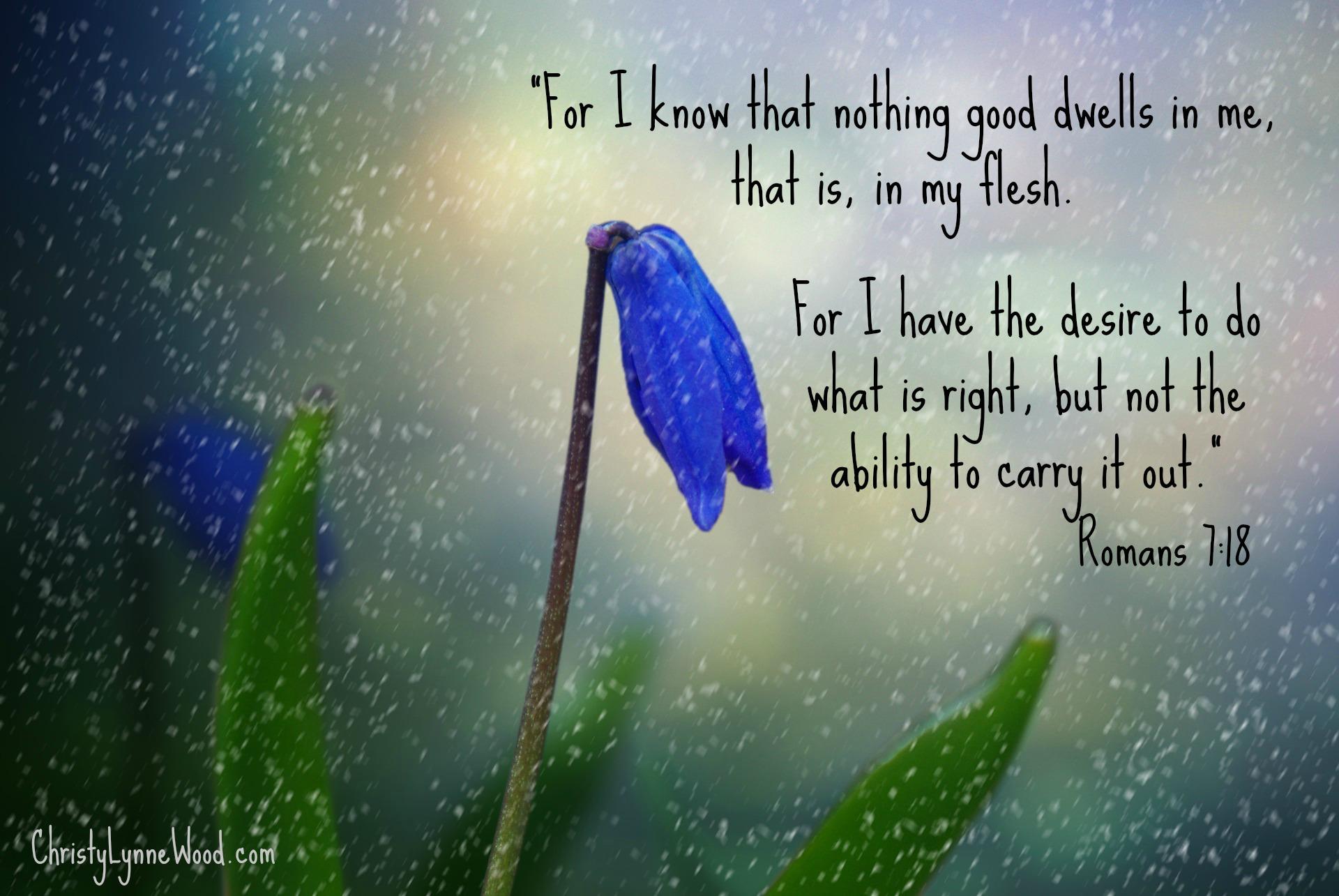 flower-1331774_1920